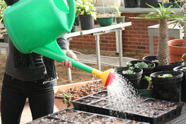 CAUGHT IN ACTION: A member of the horticulture team helps take care of a planting.